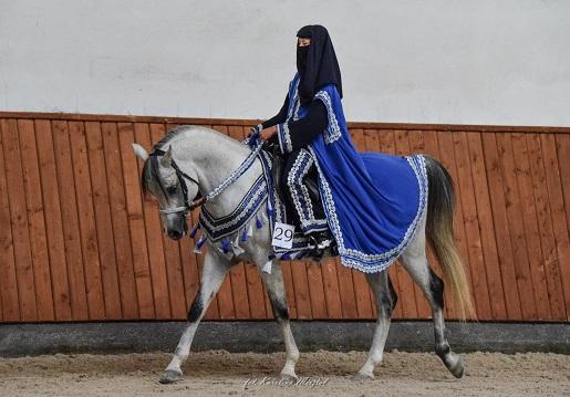 عربات الخيول الم ميزة إنتاج شركة مينديكا Arabian Horse Culture International Institute